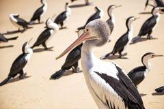 Birds resting on the beach Stock Photo