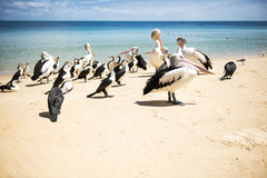 Birds resting on the beach Royalty Free Stock Photo