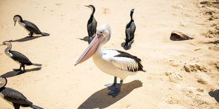 Birds resting on the beach Royalty Free Stock Photography