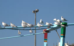 Birds resting on board Royalty Free Stock Photography