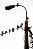 Birds resting on electric cable Stock Photography