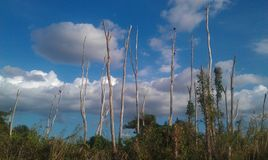Birds resting on Everglades swamp trees stock image