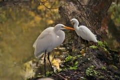 Birds resting Stock Photo