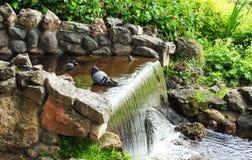 Birds resting near water Stock Photos