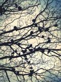 Birds resting. Birds perched in tree Stock Photos