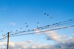 Birds. Resting on the power lines at dawn Royalty Free Stock Photography