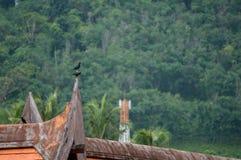 Birds resting Royalty Free Stock Image