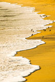 Birds resting on the shore Royalty Free Stock Photos