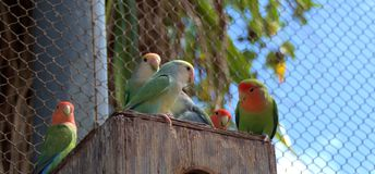Birds. Are resting on a tree house Stock Photography