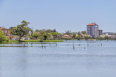 Birds resting at Violao lake in Torres Royalty Free Stock Image