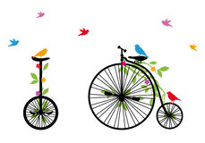 Birds on retro bicycle, vector illustration Stock Photos