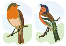 Birds robin and finch. Illustration of two singing birds Royalty Free Stock Photo