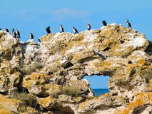 Birds on rock. Stock Photo
