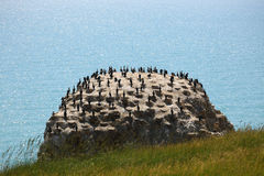 Birds on rock Stock Image