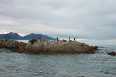 Birds on a rock, Kaikoura Royalty Free Stock Photos