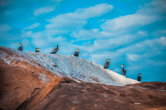 Birds on the rock Royalty Free Stock Image