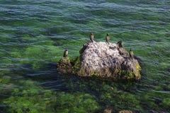 Birds on the rock near the sea Stock Photography