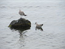 Birds. On a rock in the proximity of the black sea royalty free stock photography