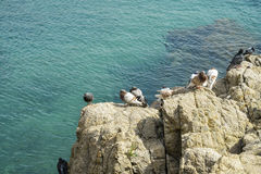 Birds on rock by the sea Royalty Free Stock Images