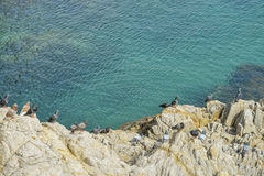 Birds on rock by the sea Royalty Free Stock Photography