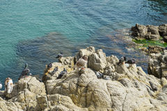 Birds on rock by the sea Royalty Free Stock Image