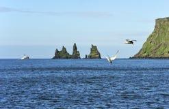 Birds and rocks Reynisdrangar. Rocks Reynisdrangar at Vik, Iceland Stock Photos