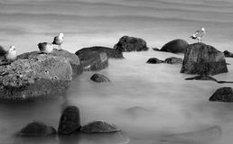 Birds on rocks Royalty Free Stock Photo