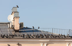 Birds on the roof Royalty Free Stock Photography