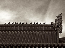 Birds on roof in row sepia Royalty Free Stock Photography