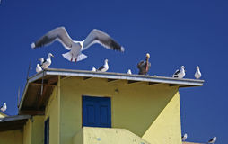 Birds on roof top Royalty Free Stock Image