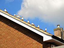 Birds on a rooftop Royalty Free Stock Photography