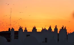 Birds on rooftops. At dusk stock images
