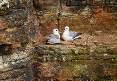Birds rookery Stock Photo