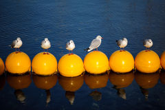 Birds in a row. Standing on yellow yacht border Royalty Free Stock Images