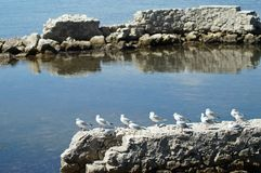 Birds in row. Several seagulls standing in row on a rock over mediterranean sea Stock Photo