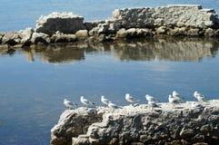 Birds in row Stock Photo