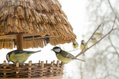 Birds in a row. Waiting to eat Royalty Free Stock Images