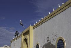 Birds in a row on a wall. A group of seagulls sitting on a wall in Essaouira, Morocco with a leader in front of them on the lamp post Stock Photo