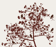 Birds on the rowan tree. Vector image of the sparrows on the rowan tree in the autumn Royalty Free Stock Images