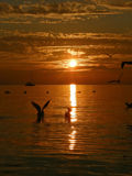 Birds, sailboat, sunset, sea Royalty Free Stock Photography