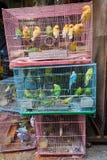 Birds for sale in bird market Stock Photos