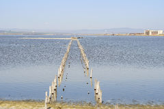 Birds on salty lake Stock Photo