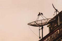 Birds are on satellite dishes. royalty free stock images