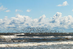 Birds and sea. Royalty Free Stock Photos