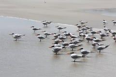 Birds. Sea birds on Atlantic coast of Florida Stock Photo