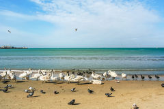 Birds on a sea beach on a spring day Stock Images