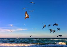 Birds and sea Stock Photography
