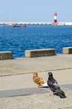 Birds on the sea. Pigeons sitting on the pier near the sea Royalty Free Stock Photo