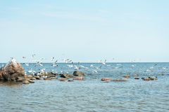 Birds and sea. Royalty Free Stock Photography