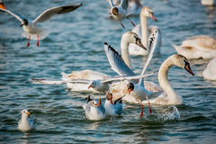 Birds of the sea Stock Photography